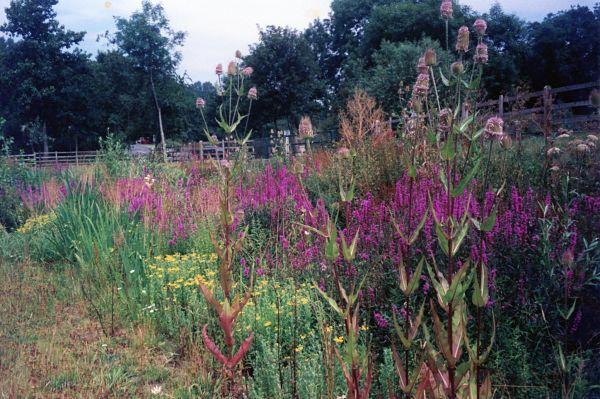 Millennium Trust Wild Flowers